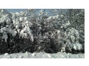 Snowmegedon