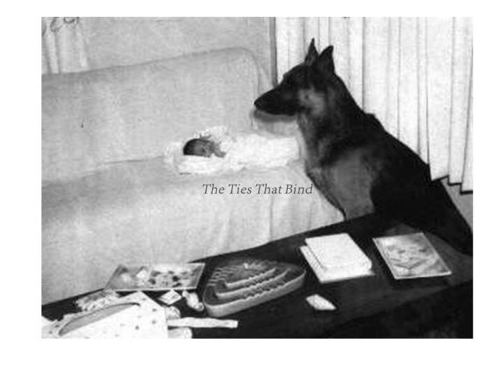 Prince Troy II - The other member of the family